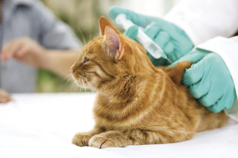 В Люберцах пройдет вакцинация животных против бешенства